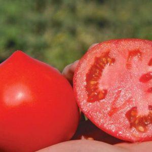 pr-agro-primo-red-f1-tomat-vilmorin