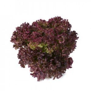 pr-agro-satin-f1-salat-rajk-czvaan