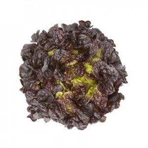 pr-agro-satudaj-f1-salat-rajk-czvaan