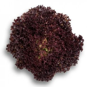 pr-agro-sensibel-f1-salat-rajk-czvaan