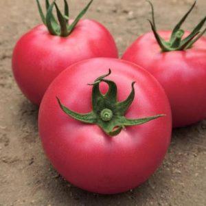 pr-argo-lankang-f1-tomat-vilmorin