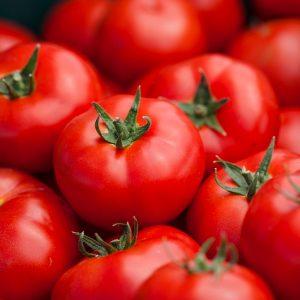 baribine-f1-tomat-singenta