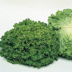 fanli-f1-salat-singenta