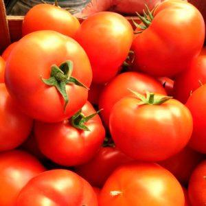 bostina-f1-tomat-singenta
