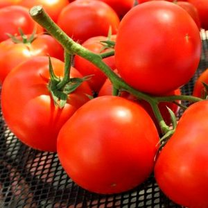 fantastina-f1-tomat-singenta