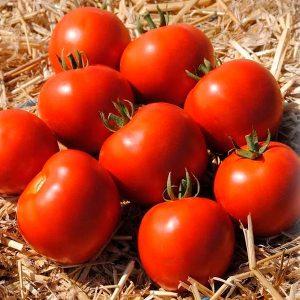 mamako-f1-tomat-singenta