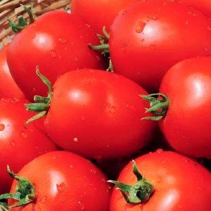 namib-f1-tomat-singenta