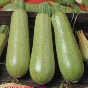 pr-agro-sczilli-f1-kabachok-seminis
