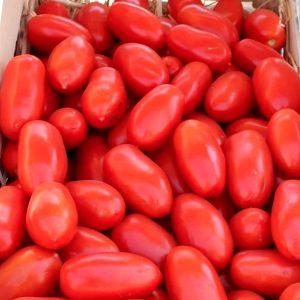 ulisse-f1-tomat-singenta