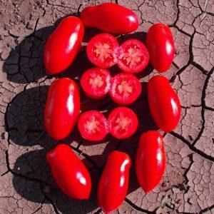 pr-agro-gerdon-f1-tomat-seminis