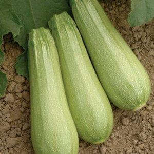 pr-agro-iolanta-f1-kabachok-seminis