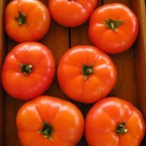 pr-agro-martez-f1-tomat-seminis