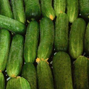 pr-agro-masha-f1-ogurecz-seminis