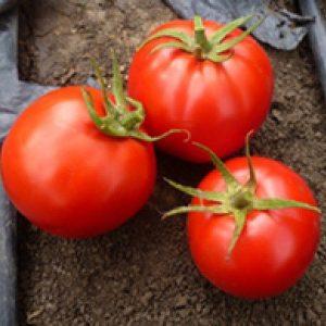 pr-agro-super-red-f1-tomat-seminis