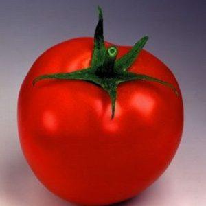 pr-agro-tanya-f1-tomat-seminis