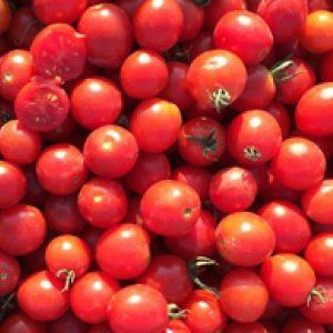 pr-agro-to-1435-f1-tomat-seminis