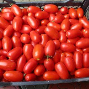 pr-agro-frambo-f1-tomat-hazera