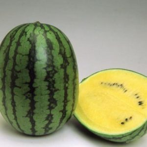 pr-agro-golden-tajger-f1-arbuz-vilmorin