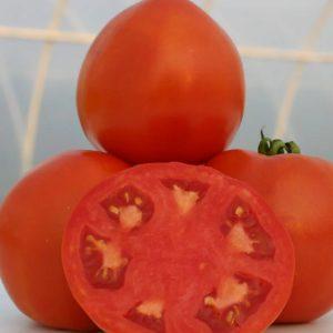 pr-agro-lamantin-f1-tomat-nyunems