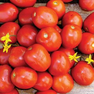 pr-agro-lampo-f1-tomat-nyunems