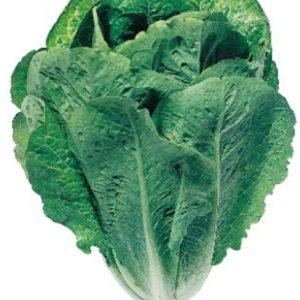 pr-agro-liraz-f1-salat-ajsberg-hazera