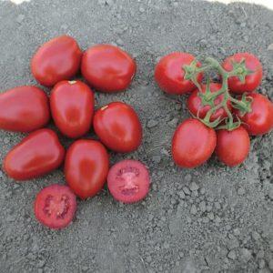 pr-agro-milta-f1-tomat-vilmorin