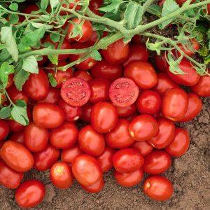 pr-agro-n-6416-f1-tomat-nyunems-1000-sht