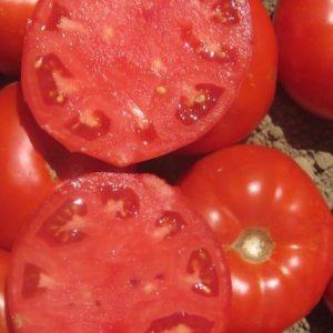 pr-agro-oberon-f1-tomat-vilmorin