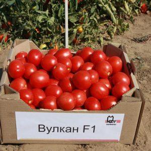 pr-agro-vulkan-f1-tomat-nyunems