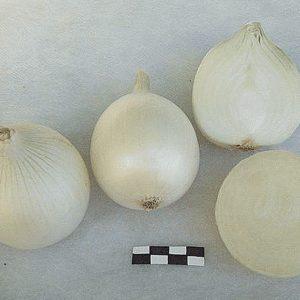 pr-agro-neman-f1-luk-gavrish