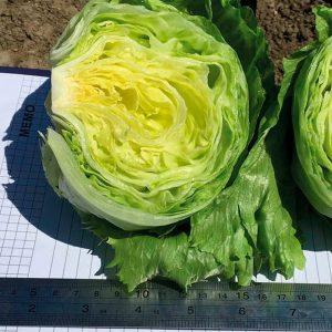 pr-agro-skindel-f1-salat-nyunems