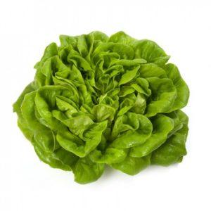 pr-agro-akvino-f1-salat-rajk-czvaan