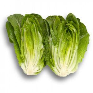 pr-agro-auvona-f1-salat-rajk-czvaan