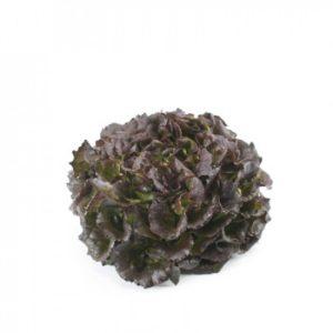 pr-agro-bobal-f1-salat-rajk-czvaan