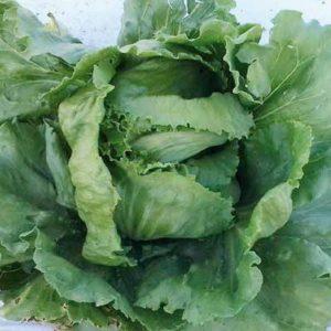 pr-agro-denver-f1-salat-seminis