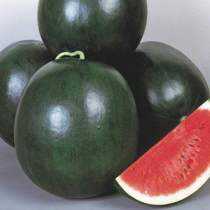 pr-agro-dulzor-f1-arbuz-enza-zaden