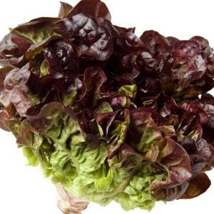 pr-agro-ezra-f1-salat-izi-lif-enza-zaden