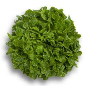 pr-agro-gumboldt-f1-salat-rajk-czvaan