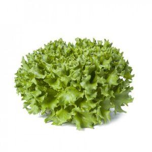 pr-agro-karavel-f1-salat-rajk-czvaan