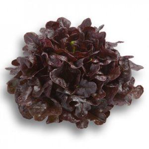 pr-agro-kserafin-f1-salat-rajk-czvaan