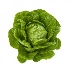 pr-agro-kvintus-f1-salat-rajk-czvaan