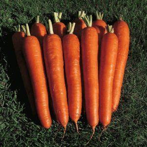 pr-agro-mirna-f1-morkov-seminis